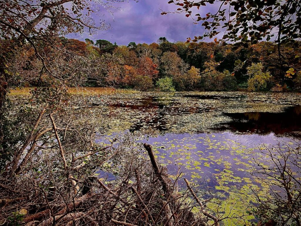 """An Autumn Day at Culzean"""